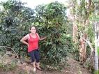 コロンビア マリア・マルレニーさんの農園