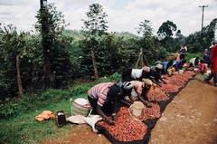 ケニア『カラツファクトリー』